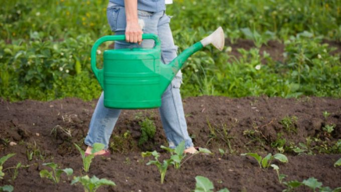 zene-poljoprivreda1